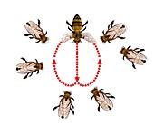 Honeybee dance,artwork