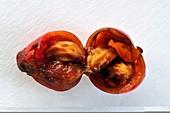 Holly berry (Ilex aquifolium)