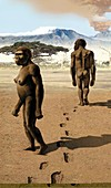 Australopithecus afarensis,artwork