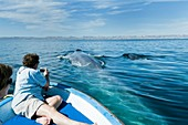 Whale watching,Mexico