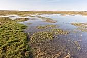 Salt marsh,UK