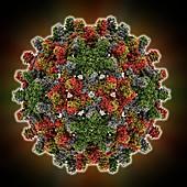 Hepatitis B virus capsid,molcular model