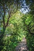 Rural footpath
