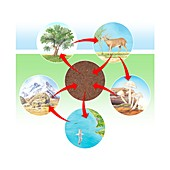Phosphorus cycle diagram