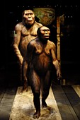 Australopithecines Lucien and Lucy
