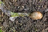 Slug poisoned by metaldehyde
