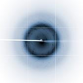 Chikungunya virus diffraction pattern