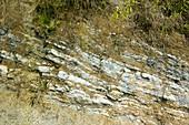 Tropical rainforest rock strata