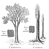Lycopod prehistoric plants,artwork