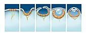 Evolution of the eye,artwork