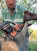 White rhinoceros horn removal