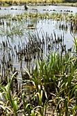 A created wetland used for bioremediation
