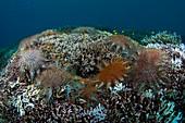 Starfish feeding on coral reef