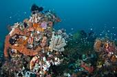 Invertebrates and fish in reef habitat