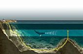 Underwater sound recording,artwork