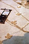 Dinosaur footprints,fossil discovery