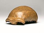 Neanderthal cranium (Neanderthal 1)
