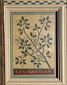 Holly (Ilex aquifolium),decorative panel