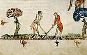Ball game,14th-century manuscript