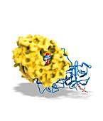 Ricin molecule,artwork