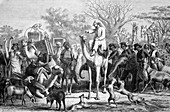 Wildlife expedition in Africa,1880s