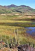 Bale Mountains marshland,Ethiopia