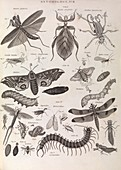 Insect illustrations,1823