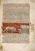 Wolf advancing on a sheepfold