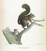 A squirrel