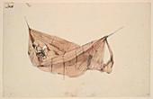 Amerindian in a hammock