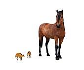 Eurohippus and modern horse,artwork