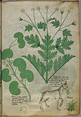 Illustration of plants and a donkey