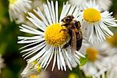 Honey bee pesticide research