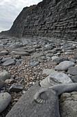 Ammonite in front of Lias cliffs