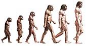 Timeline of human evolution,artwork