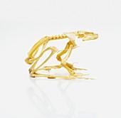 Skeleton of African bullfrog