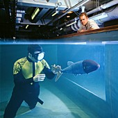 RoboPike swimming robot