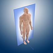Coronal anatomical orientation plane