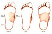 Anatomy regions of the foot,footprints