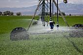 Irrigation boom in alfalfa field