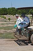 Farm workers applying pesticide