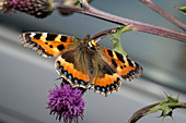 Butterfly radar tagging