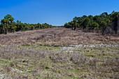 Everglades restoration,Florida,USA
