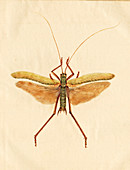 English Insect illustration,James Barbut