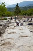 Dinosaur fossil footprints,France