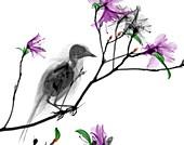 Bird on azalea branch,X-ray