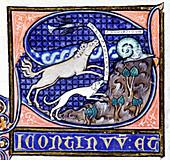 Mediaeval zoological manuscript
