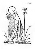 Oiseau gourmandeur,illustration