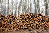Piles of logs in a forest