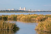New Orleans and surrounding wetlands